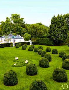 Beautiful and light-hearted, sprawling hedge garden in Southampton, NY with a view to the flared-hip roofed pool pavilion beyond.