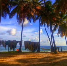 Laborie St.Lucia