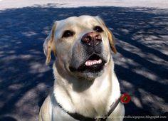 Jak wychować szczęśliwego psa: Głosowanie na zadania w ramach BUDŻETU OBYWATELSKI...