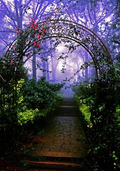 Forest Arch, Nandi Hills, Bangalore. India