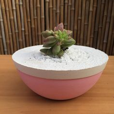 Paster pink - for bedroom Concrete Decor concrete planter concrete pot by SweetYellowDecor