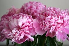 someone gave me pink roses today… very sweet. I love them peonies though.