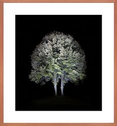 """Ralf Peters  """"Baum #2"""" from Series Night / Colours  200 x 184 cm  C-Print Diasec, framed"""