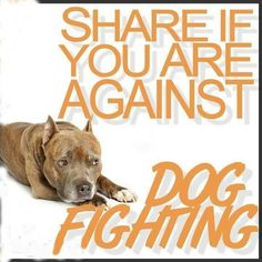 #DogQuotes  #FightDogFighting