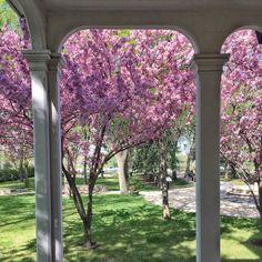 Ecology, Conservation, Arch, Outdoor Structures, Twitter, Garden, Nature, Garten, Arches