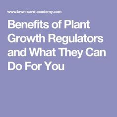 Benefits of Plant Growth Regulators and What They Can Do For You