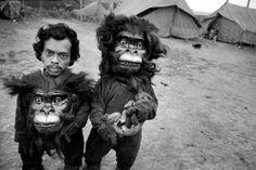 monkeys n' dogs