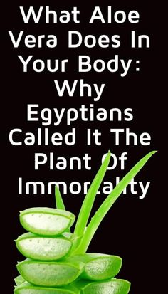 Egyptians called this The Plant of Immortality, while the Native Americans referred to it as The Wand of Heaven. Holistic Health Tips for Beginners, Brain Foods Health Diet, Health And Nutrition, Health And Wellness, Best Nutrition Food, What Is Healthy, Best Weight Loss Pills, How To Dry Rosemary, Best Diet Plan, Good Health Tips