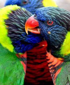 Kansas City Zoo - Tropical Birds by Will Merydith, via Flickr