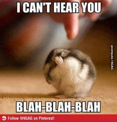 Funny Quotes: Top 30 Funny Animal Pictures and Jokes images . - BildersPin : Funny Quotes: Top 30 Funny Animal Pictures and Jokes images . Animal Captions, Cute Animal Memes, Funny Animal Quotes, Animal Jokes, Cute Funny Animals, Funny Quotes, Baby Quotes, Clean Animal Memes, Funny Animals Talking