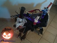 The Crazies Carrying the Dead - Illusion Halloween Costume for Dogs