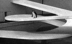 Berthold Lubetkin, London Zoo, Penguin's Pool