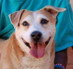 Dahlia - Nevada SPCA - 8 year old  Medium-size Heinz 57 with Corgi - Dahlia loves going for walks and snaps her tail back and forth in joy.  We love her brilliant smile.  Single dog family.