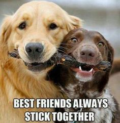 #dog #friends #friendship #quote #saying #true #life #love