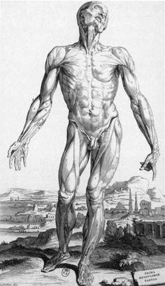 Andreas Vesalius - Anatomy