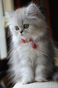 Утренние котята / Фото котят / CATFOTO.COM фотографии кошек и котят, дикие…