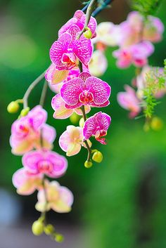 ♀ Bokeh photography flowers pink orchid