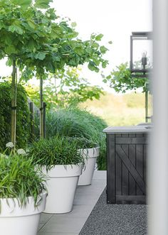 The garden pots and also balcony covered with several shades and greenery could make you relax and for a minute to forget daily concerns. You could select garden pots which is plentiful with greenery or vivid garden packed with several kinds color. White Gardens, Small Gardens, Outdoor Gardens, Outdoor Plants, Garden Deco, Garden Pots, Balcony Garden, Summer Garden, Home And Garden