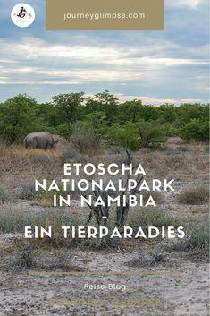 Der Etoscha Nationalpark ist ein wahres Paradies für Tierfreunde. Der Park im Norden Namibias lädt für längere Touren ein. Im Blog geben wir Tipps für den Besuch. Parks, Safari, Namibia, Blog, Photos, Types Of Animals, Photo Tips, Animal Photography, Paradise
