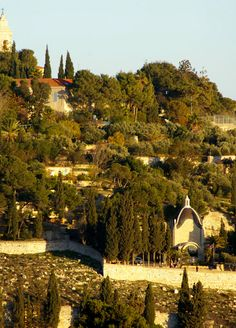 """Garden of Gethsemane, Jerusalem - Matthew 26: 36. Then Jesus went with his disciples to a place called Gethsemane, and he said to them, """"Sit here while I go over there and pray."""""""