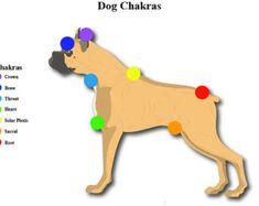 7 Chakra Dog Printable Educational Chart Animals Reiki Hand Positions Energy Healing Vortexes Therapy Energy System Pendulum