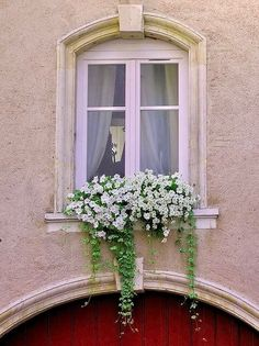 Window box filled with white petunias, Nancy, France - Jill's Garden Window Box Flowers, Balcony Flowers, Window Boxes, Flower Boxes, Arched Windows, Windows And Doors, Garden Windows, White Gardens, Container Gardening