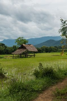 Rice field on our way to Kuang Si Waterfall - How and When to Visit the Stunning Kuang Si Waterfall in Luang Prabang, Laos - Wandering the World Blue Aesthetic Pastel, Sky Aesthetic, Beautiful Scenery Pictures, Nature Pictures, Village Photography, Nature Photography, Beautiful Landscape Paintings, Laos Travel, Luang Prabang