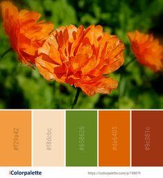 Color Palette Ideas from Flower Wildflower Vegetation Image Wedding Color Combinations, Color Combos, Color Schemes, Orange Color Palettes, Colour Pallete, Pallet Wedding, Creative Colour, Annual Plants, World Of Color
