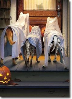 3 Dogs Trick Or Treating Funny Halloween Card - Greeting Card by Avanti Press