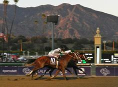 Mucho Macho Man, on the inside in this picture, wins the Breeders' Cup Classic by a nose.