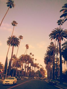 Palm Trees | California Vibes | Awesome Photos
