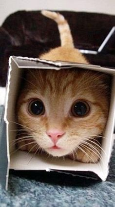 Awww kitty, you're so cute with your Puss N Boots eyes... And always trying to fit into tiny boxes. And the pink nose too.