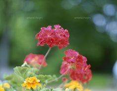 植物の写真/flowerバージョン→カンボジア(というかアジア感)がでる、お花の写真があると嬉しいです。