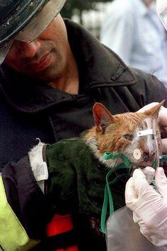 Bombero dando oxigeno a gatito