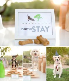 """Puppy yoga party! Love the nama-""""stay"""" sign. Click pin for more doggy-inspired ideas!  