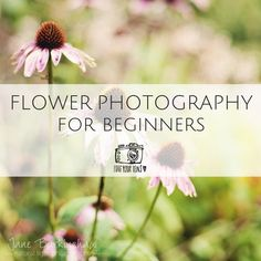 Flower Photography, Photography For Beginners, Lens, Nature, Flowers, Beautiful, Naturaleza, Flower Photos, Klance