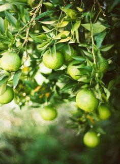 Lip smacking limes