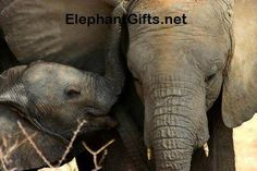 Visit ElephantGifts.net for more funny elephant photos and videos Funny Elephant, Happy Elephant, Elephant Gifts, African Forest Elephant, Asian Elephant, Elephant Pictures, Elephants Photos, Elephants Never Forget, Save The Elephants