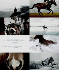 The Scorpio Races by Maggie Stiefvater Maggie Stiefvater Books, Horse Background, The Scorpio Races, Racing Quotes, Hamilton Fanart, Book Memes, Book Tv, Character Aesthetic, Fantasy Artwork