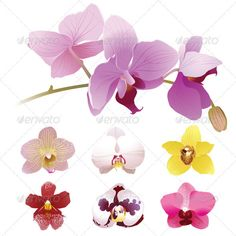 Orchids Flowers  #GraphicRiver         Set of 7 kinds of orchids flowers. Eps 8 and Ai CS 3 included.     Created: 15February13 GraphicsFilesIncluded: JPGImage #VectorEPS #AIIllustrator Layered: No MinimumAdobeCSVersion: CS3 Tags: art #beautiful #beauty #bloom #blossom #branch #buds #color #design #elegance #exotic #feminine #floral #flowers #nature #object #orchids #ornate #pattern #petals #pink #plants #purple #realistic #spring #stalk #stem #summer #tropical #vector