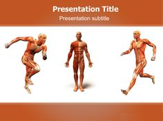 Human anatomy skeleton powerpoint template find high quality anatomy body the anatomy of human body is the scientific study of the morphology ppt templatetemplateshuman toneelgroepblik Image collections