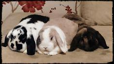 Rambo Ripley Rico bunny friends