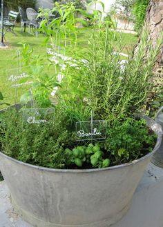 Herbs in Galvanized tub. Love it!