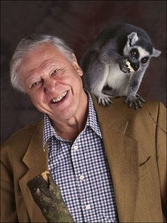 Sir David Attenborough, a national treasure! Here he is with a ring-tailed lemur, from Madagascar. David Attenborough, National Treasure, Zoology, British Actors, People Of The World, Primates, Special People, Natural World, Animal Kingdom