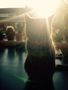 #sunkissed #cat #Winnie
