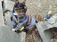 fallout cosplay cat