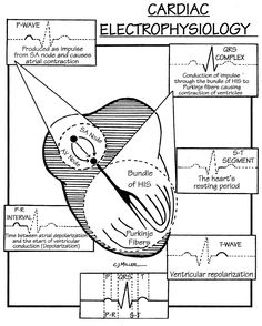 NICE sepsis guidance: Visual summary [BMJ infographic