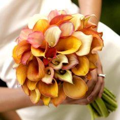 Mini Callas in soft pastel shades