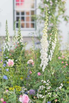 Chelsea Flower Show 2018 - Jonathan Snow - Landscape and Garden Design Landscape Design, Garden Design, Chelsea Flower Show 2018, South African Wine, Homestead Gardens, Shade Garden, Home And Garden, Snow, Flowers