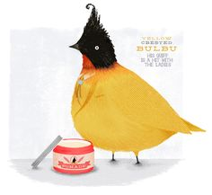 Yellow crested bulbu, by Kate Wilson